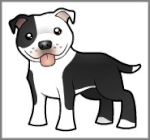 Staffy-Bull-Terrier