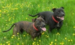 lovemystaffies