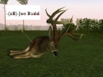 Joe Budd