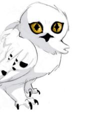 AnOwl