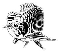 Les poissons 4-24