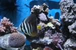Aquariums 426-45