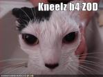 Zod kitteh