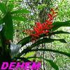Dehem