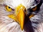 eagle_eyez