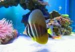Ikan dan Coral air laut 2665-48