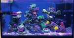 ~SALTWATER AQUARIUM ZONE~ 3426-49