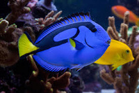 Marine Aquarium Equipment/Additives 5033-16