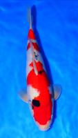 Alat aquarium air tawar,Pakan,Obat-obatan,atau Pupuk Aquascaping,,dll 74-89