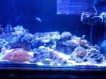 ~SALTWATER AQUARIUM ZONE~ 783-61