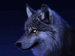 Wolfmen45