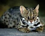 *~Leopardheart~*