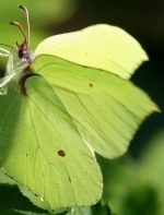 schmetterling0004
