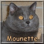 Mounette