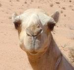 rQ.CAMELS