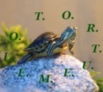 tortuemelo