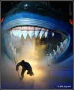 Dg-Sharks