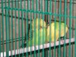 le fou des oiseaux