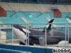 orca72