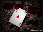 Good beat/ Bad beat poker 17360-14