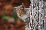 squirrel30