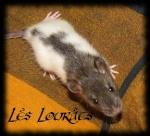 Lounias