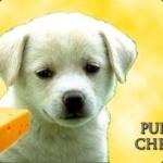 puppycheese
