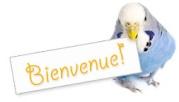 bonjour!! 2566594925