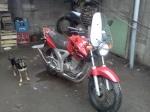 ROGER 250