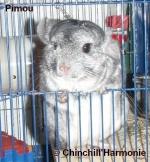 chinchillharmonie