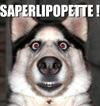 Satrape