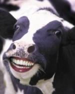 Brainwashed Cow