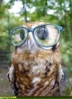 owlsarebirdstoo