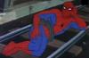 Spider Sexy