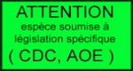 [Fiche] Stromatopelma calceatum 954283108