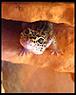 Geckolino