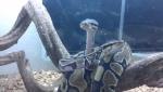 snake60600
