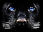 Panther42