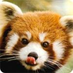 pandasnoner