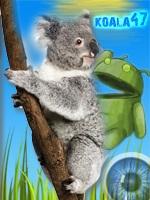 koala47