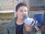 pigeon33
