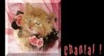 chacha18801