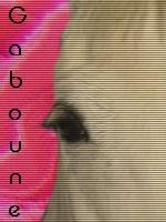 Gaboune