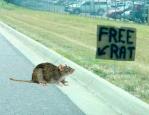 free_cat
