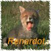 renardot
