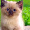 Kačiukas~