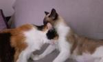 Les chats 1629-54