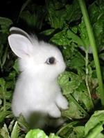 Funny Bunny™
