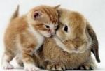 Lovely_animals
