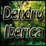 Dendro Ibérica